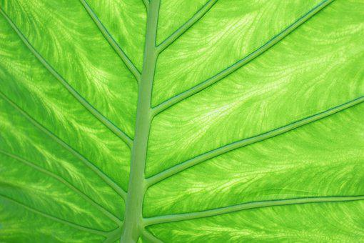 Green, Bright, Digital, Manipulation, Pattern, Texture