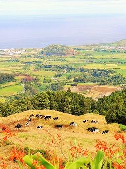 Azores, Nature, Landscape, Vegetation, Green, Volcano