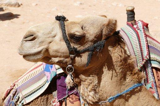 Jordan, Wadi Rum, Desert, Sand, Wadi