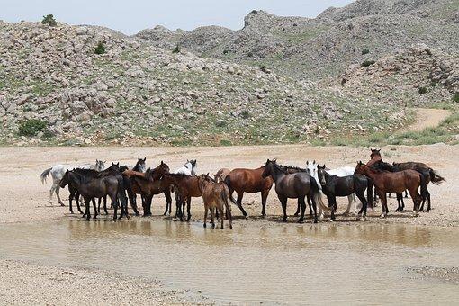Horse, Wild, Rural, Herd