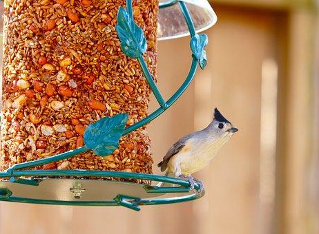 Bird, Cute, Bird Feeder, Backyard, Wildlife, Feathers