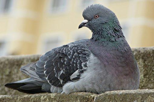 Dove, Bird, Stair Step, Sitting, Plumage, Bill, Animal