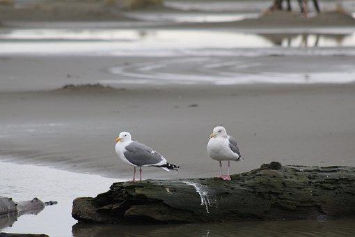 Seagulls, Birds, Rocks, Ocean, Ocean Waves, Beach