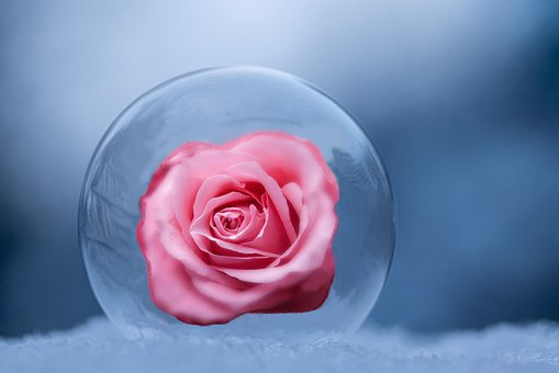 Ball, Ice Ball, Rose Bloom, Composing, Rose, Blossom