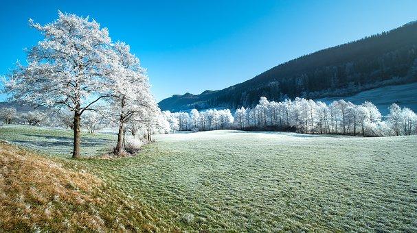 Field, Trees, Frost, Hoarfrost, Snow, Mountains, Meadow