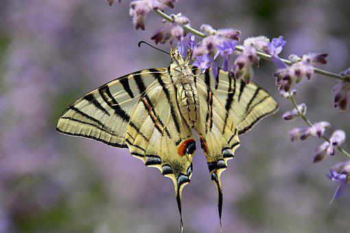 Butterfly, Yellow And Black, Insects, Flying Insects