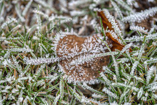 Winter, Cold, Freezer, Eiskristalle, Grass, Leaves