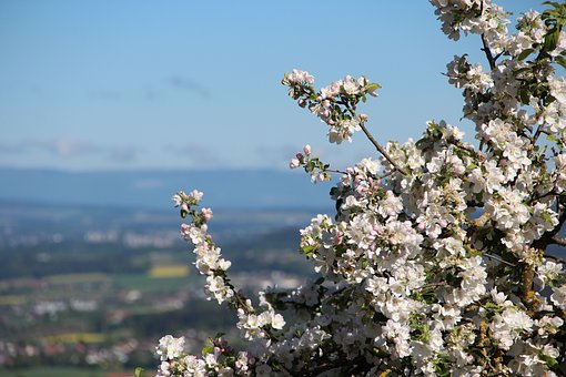 Natur, Frühling, Blühen, Blüte, Baum