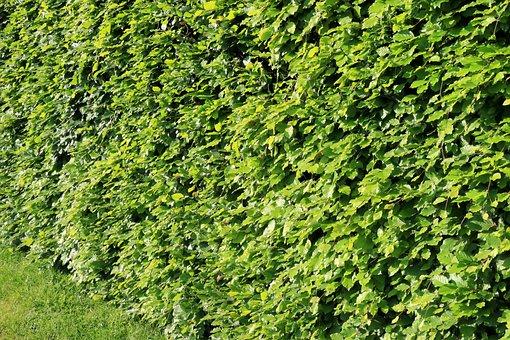 Hague, Green, Vegetable, Garden, Leaves, Plant, Park