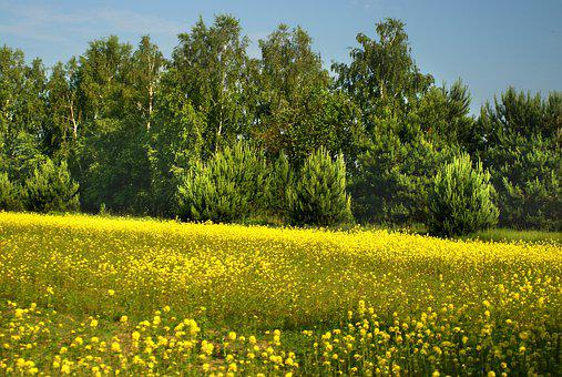Meadow, Tree, Spring, Flowers, Landscape, Nature