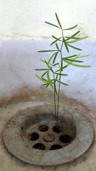 Plant, Leaves, Green, Leaf, Nature, Spring, Garden