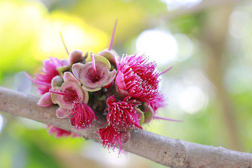 Flowers, Ruangroi, Wilt, Leaves, Wither