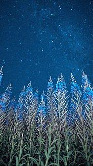Stars, Flowers, Night, Milky Way, Nature, Sky, Astro