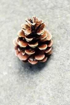 Fir, Conifer, One, Brown, Pine, Cone, Nature