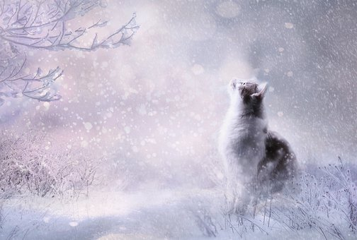 Animal, Cat, Pet, Domestic Cat, Animal World, Fur, Head
