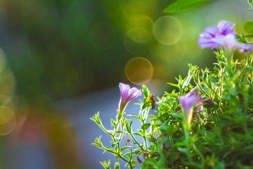 Breath, Flower, Plant, Nature, Green, Breathe