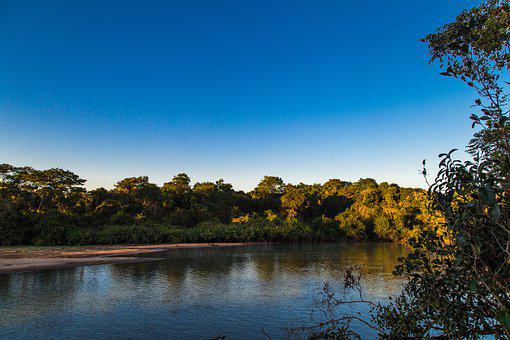 Rio, Nature, Landscape, Trees, Water, Forest, Brazil