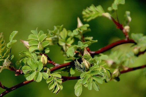 Foliage, Fulfillment, Spring, Shrub, Button Floral