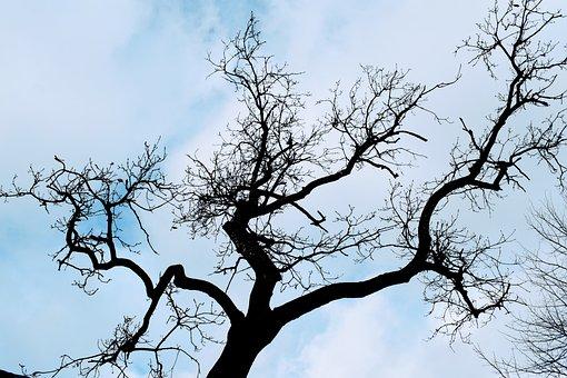Tree, Black, Silhouette, Winter, Sky