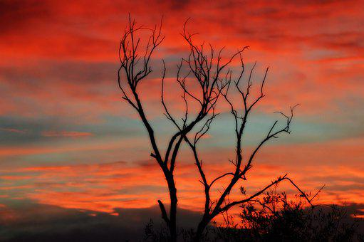 Sunset, Orange, Blue, Landscape, Tree, Sky, Light
