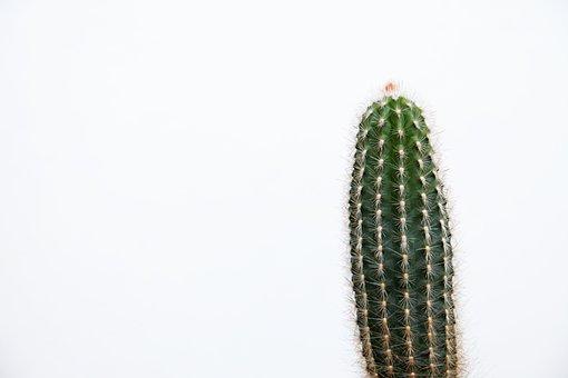 Desert, Plant, Cactus, Cacti, Nature, Succulent