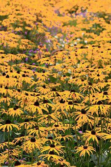 Yellow Flower, Summer, Bloom, Purple, Flower, Blossom