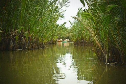 Forest, Trees, Tree, Boat, Pond, Lake, Marsh, Swamp