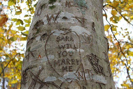 Tree Carvings, Trees, Nature, Autumn