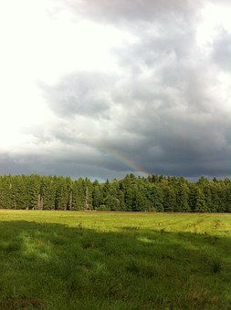 Rainbow, Summer, Nature, Green, Landscapes, Beautifully