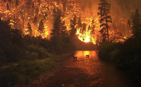 Forest Fire, Brand, Fire, Conflagration