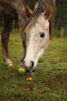 Horse, Mold, Thoroughbred Arabian, Carrot, Carrots, Eat