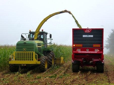 Work, Harvest, Agriculture, Worker, Cornfield, Corn