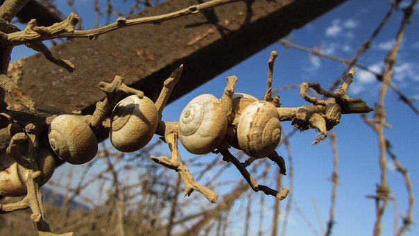 Shells, Snail, Colony, Wire, Metal, Rusty, Dusty, Fence