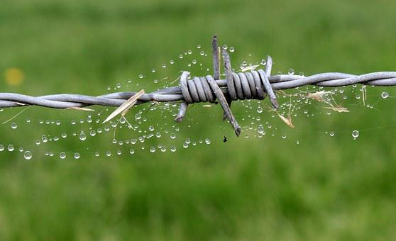 Wire, Barbed Wire, Fence, Security, Metal, Spur