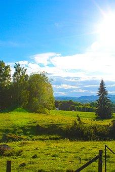 Hage, Bed, Himmel, Tree, Sweden, Landscapes
