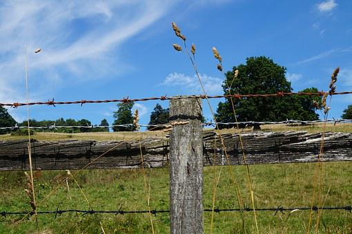 Fence, Barbed Wire, Wheat, Landscape, Meadow, Tree