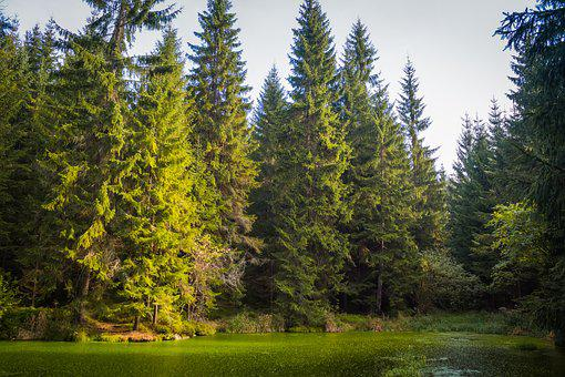 Forest, Pond, The Giant Mountains, Trees, Nature, Water