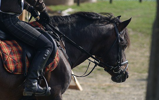 Riding, The Horse, Harness, Horse, Bridle, The Reins
