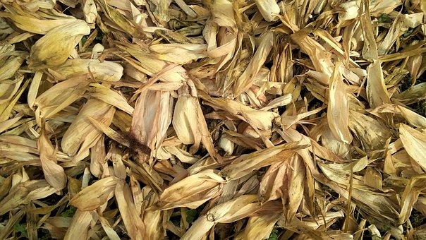 Dry, Pile, Texture, Market, Herb, Abundance