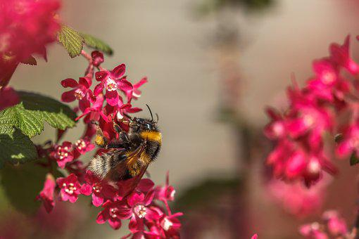 Bee, Hummel, Wasp, Always, Flueger, Insect, Nectar