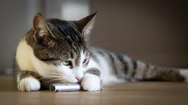 Cat, Animal, Young, Pet, Tiger, Domestic Cat, Kitten