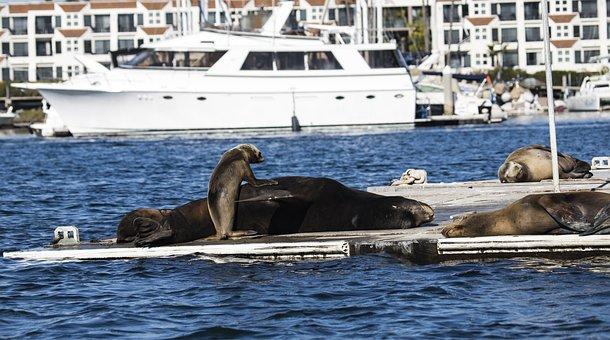 Sealion, California, Dock, Ocean, Sea, Pier, Vacation