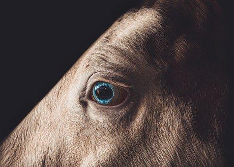 Horse, Animal, Eye, Farm, Riding, Equestrian, Cowboy