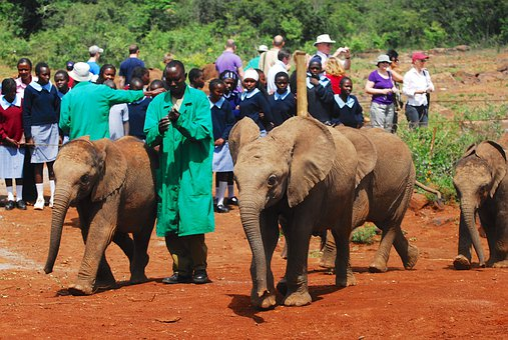 Feeding Baby Elephants, Bottle Feeding, Nairobi, Kenya