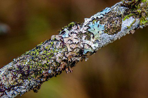 Branch, Weave, Nature, Moss, Fouling, Close Up