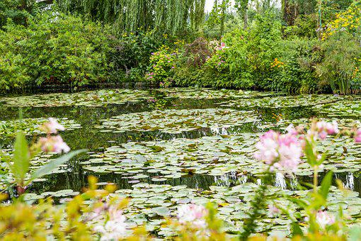 Pond, House, Nature, Plant, Lake, White, Water, Lily