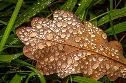 Leaf, Oak Leaf, Drop Of Water, Dewdrop, Autumn Motive