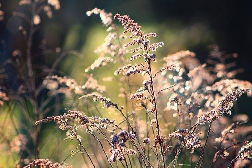 Nature, Plants, Dead, The Stems, Light