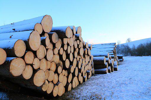 Timber Industry, Tree Trunks, Logging, Like, Forestry
