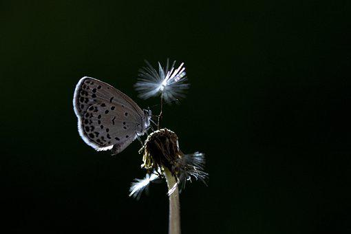 Butterfly, Inoculation, Macro, Photography, Nature